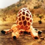 giraffeegg1a