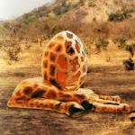 giraffeegg2a